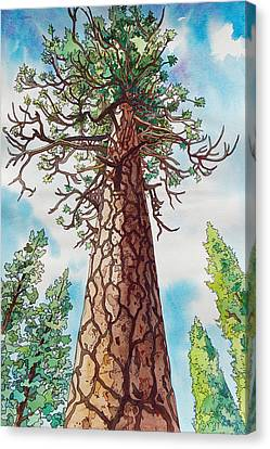 Towering Ponderosa Pine Canvas Print by Terry Holliday
