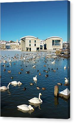 Canvas Print featuring the photograph Town Hall And Swans In Reykjavik Iceland by Matthias Hauser