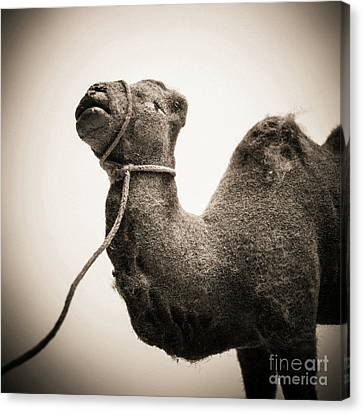 Toy Representing A Camel. Canvas Print