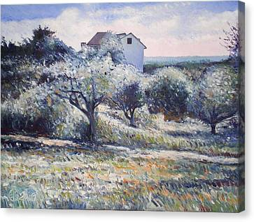 Track Leading Alongside Orchard With Farmhouse Near Monte Cardeto Italy 2009 Canvas Print by Enver Larney