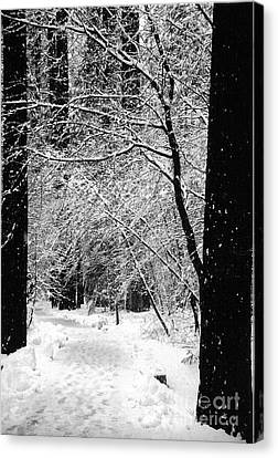 Tracks In The Snow Canvas Print