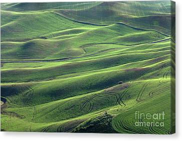 Tractor Tracks Agriculture Art By Kaylyn Franks Canvas Print by Kaylyn Franks