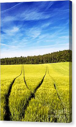 Tractor Tracks In Wheat Field Canvas Print