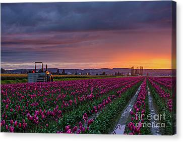 Tractor Waits For Morning Canvas Print
