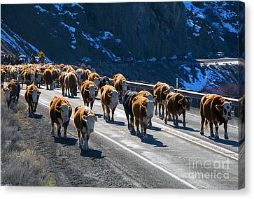 Traffic Jam Canvas Print by Mike Dawson