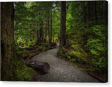 Trail Around Ward Lake Ketchikan Alaska Canvas Print