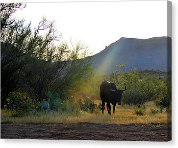 Trail Boss Canvas Print by Gordon Beck