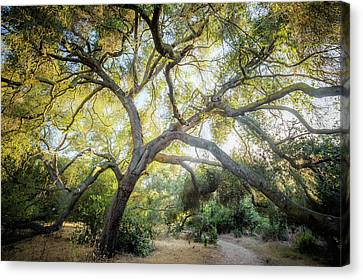 Canvas Print featuring the photograph Trail Guardian - Color Version by Alexander Kunz