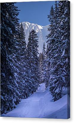 Trail Into Mayflower Gulch Canvas Print by Michael J Bauer