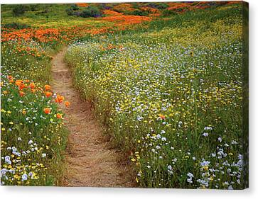 Canvas Print featuring the photograph Trail Of Wildflowers At Diamond Lake In California by Jetson Nguyen
