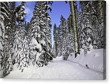 Trail Through Trees Canvas Print by Garry Gay