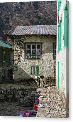 Trail To Everest - Cow In Phakding Nepal Canvas Print