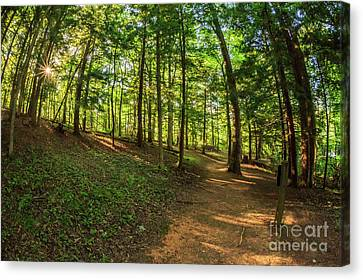 Trail To John Oliver Cabin Canvas Print