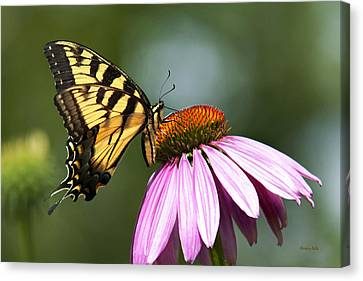 Tranquil Butterfly Canvas Print by Christina Rollo