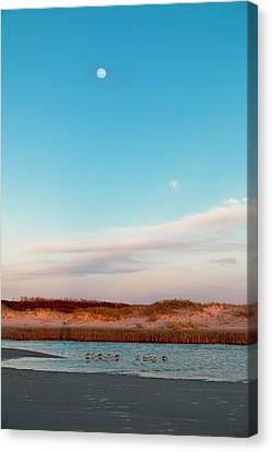 Sandpiper Canvas Print - Tranquil Heaven by Betsy Knapp