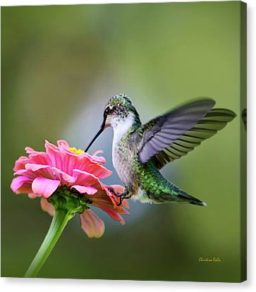 Tranquil Joy Hummingbird Square Canvas Print
