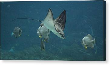 Tranquil Sea Creatures Canvas Print by Betsy Knapp
