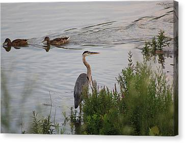 Tranquil Waterlife Canvas Print by Cathy  Beharriell