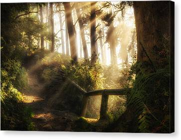 Tranquility Canvas Print by Peter Acs