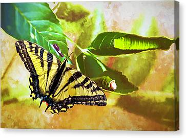 Canvas Print featuring the photograph Transformation  by Diane Schuster