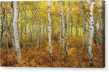 Canvas Print featuring the photograph Transition by Dustin  LeFevre