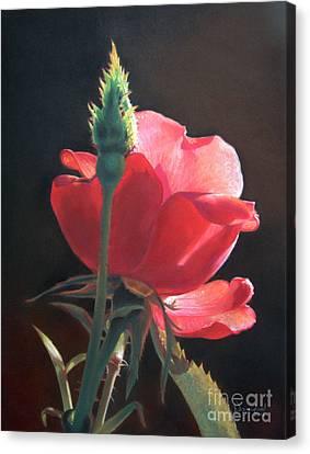 Translucent Rose Canvas Print by Nanybel Salazar
