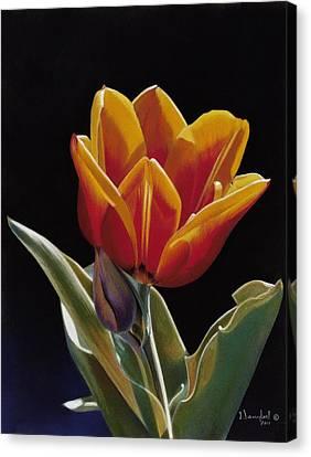 Translucent Tulip Canvas Print by Nanybel Salazar