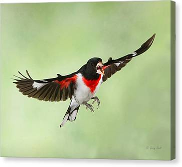 Canvas Print featuring the photograph Trash Talking Rosie by Gerry Sibell