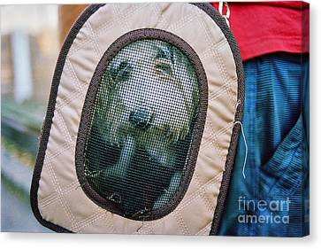 Canvas Print featuring the photograph Travel Dog by Dean Harte