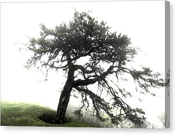 Canvas Print featuring the photograph Tree by Alex Grichenko