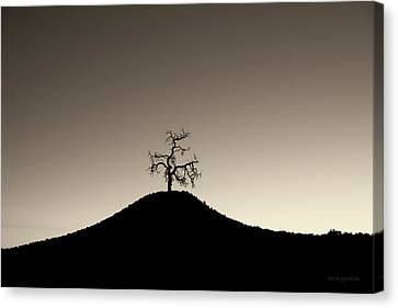 Tree And Hill  Montage Toned Canvas Print by David Gordon