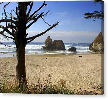 Tree And Ocean Canvas Print by Marty Koch