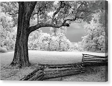Tree And Split Rail Fence Canvas Print by James Barber