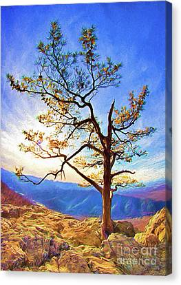 Tree And Rocks In The Blue Ridge Near Sunset Ap Canvas Print by Dan Carmichael