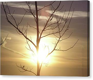 Tree And Sun Canvas Print by Richard Mitchell