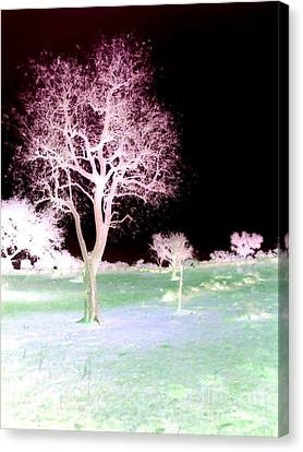 Tree Art  Canvas Print by Rs