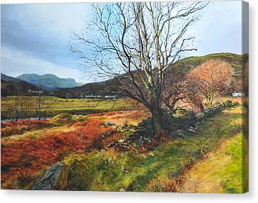 Tree At Aberglaslyn Canvas Print by Harry Robertson