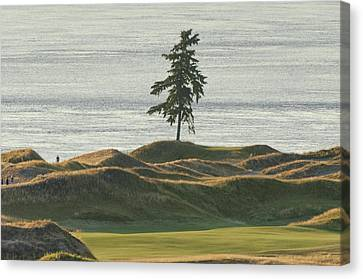 Tree At Chambers Bay Canvas Print
