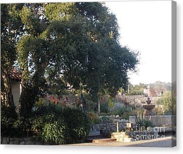 Tree At Mission Carmel Canvas Print