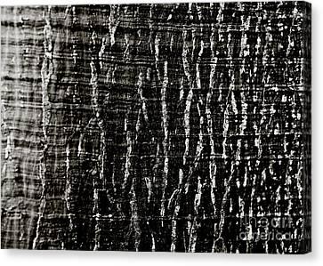 Tree Bark Canvas Print by Charmian Vistaunet