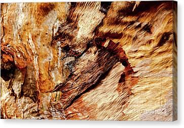 Tree Bark Series  - Patterns #2 Canvas Print
