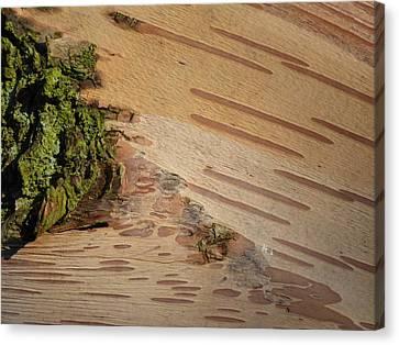 Tree Bark With Lichen Canvas Print