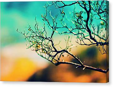 Branches On Sky Canvas Print