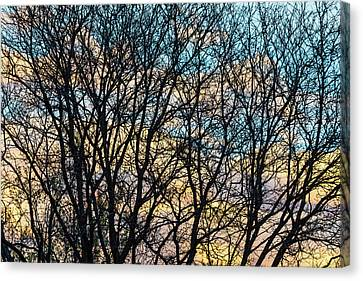 Canvas Print featuring the photograph Tree Branches And Colorful Clouds by James BO Insogna