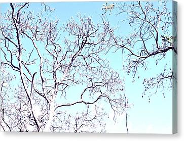 Tree Branches Reaching For Heaven 2 Canvas Print by Patricia Awapara