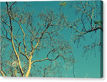 Tree Branches Reaching For Heaven Canvas Print by Patricia Awapara