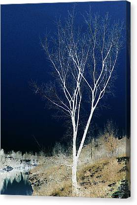 Tree By Stream Canvas Print by Stuart Turnbull