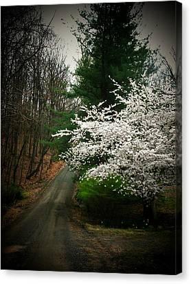 Tree By The Road Canvas Print by Joyce Kimble Smith