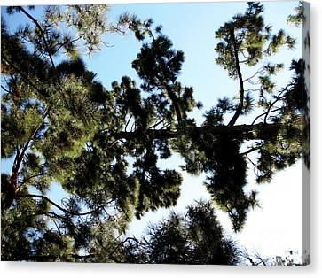 Tree Canopy Canvas Print by Karen Sydney