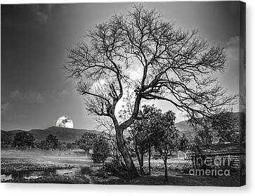 Tree Canvas Print by Charuhas Images